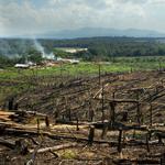 Abgebrannter Regenwald in Sumatra